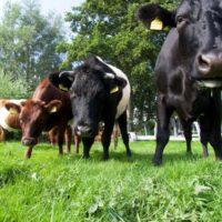 Lakenvelderboerderij-Boterhuispolder.jpg